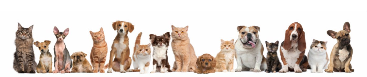 adorable group of curious cats and dogs look up while they stand, sit and lie on white background